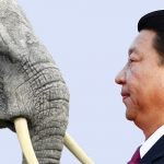 [AUDIO] Does just one man in China control the fate of Africa's elephants?